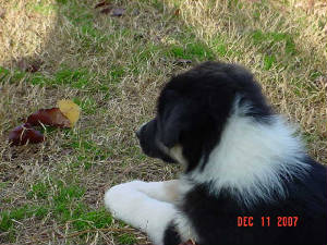 pupsplayingwithpuppies121107008.jpg