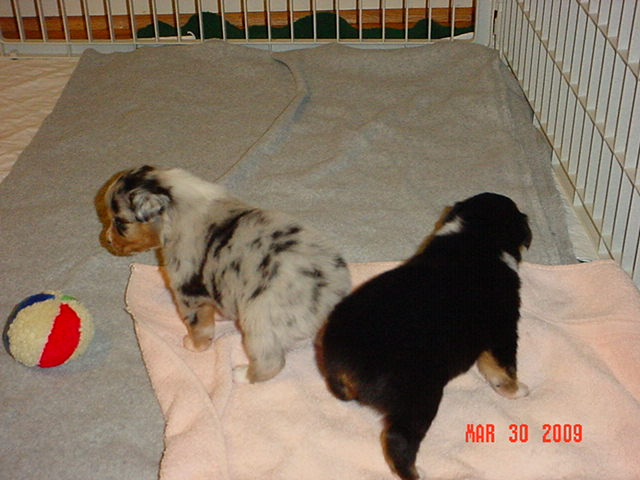 puppies3weeksold001.jpg